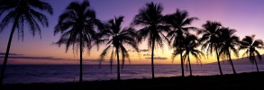 Dramatic sunset silhouette palm trees lined along beach, Maui, Hawaii, U.S.