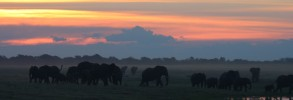Chobe River Sunset #1